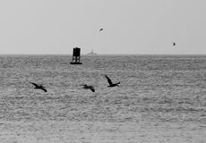 Birds flying over the ocean. And the buoy with the ship in the distance, Virginia Beach, Virginia USA Stock Photography