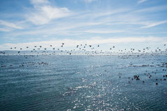 Birds flying over the ocean Royalty Free Stock Image