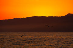 Birds flying over ocean Stock Photography