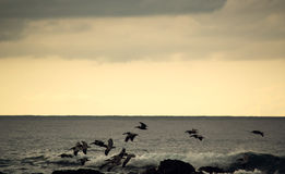 Birds flying over ocean's surface - Costa Rica Royalty Free Stock Photography