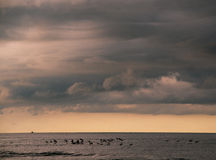 Birds flying over ocean's surface - Costa Rica Royalty Free Stock Photos