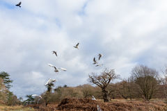 Birds flying over a river Royalty Free Stock Images