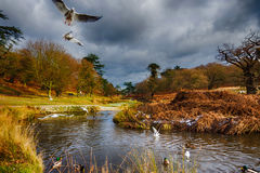 Birds flying over a river in a park at wintertime Stock Image