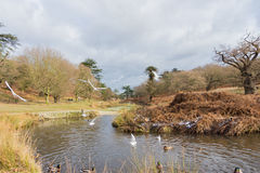 Birds flying over a river in a park at wintertime Stock Images