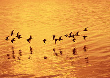 Birds flying over the sea Stock Images