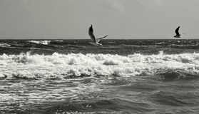 Seascape. Birds flying. Summer, sea, waves, holiday, fun - Black Sea, Romania.  Royalty Free Stock Photos