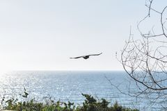 Birds flying over the sea royalty free stock images