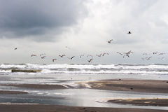 Birds flying over the sea Royalty Free Stock Photography
