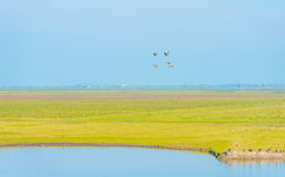 Birds flying over the shore of a lake Royalty Free Stock Photo