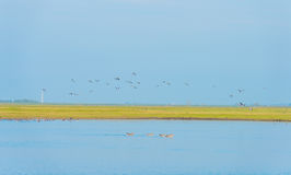 Birds flying over the shore of a lake Royalty Free Stock Images