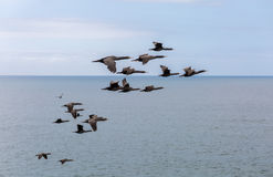 Birds Flying Over The Ocean Stock Photo