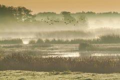 Birds flying over wetlands Royalty Free Stock Image
