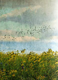 Birds flying over wild flowers Stock Photography