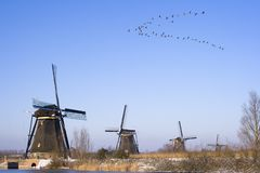 Birds flying over windmills stock photo
