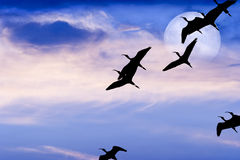 Birds Flying Silhouette Moon Stock Image