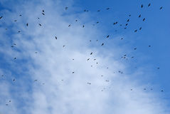 Birds flying in the sky. Royalty Free Stock Photos