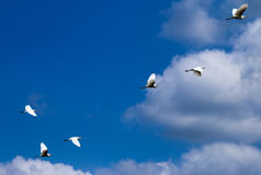 Birds are flying Royalty Free Stock Photography