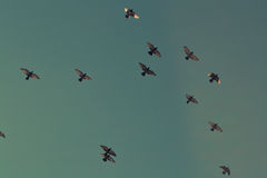 Birds flying in sky Royalty Free Stock Image