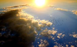 Birds Flying in the Sky during Daytime Royalty Free Stock Images