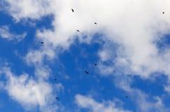 Birds flying in the sky Stock Image