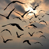Birds flying in the sky Royalty Free Stock Image
