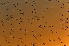 Birds flying in the sky Stock Photo