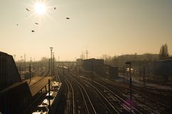Birds flying through sun over train station Stock Images