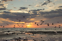 Birds flying sunrise. Shore clouds sky royalty free stock photography