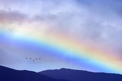Birds flying at sunrise over the mountains Stock Photography