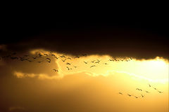Birds flying in sunset Stock Photos
