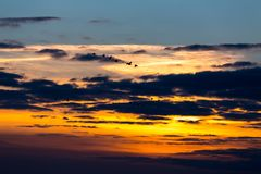 Birds flying in sunset. Against the evening sky Stock Photo