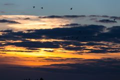 Birds flying in sunset. Against the evening sky Stock Images