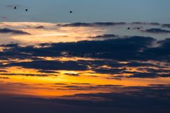 Birds flying in sunset. Against the evening sky Royalty Free Stock Photography