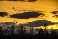 Birds Flying in Sunset Royalty Free Stock Photos