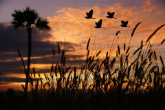 Birds flying at sunset Royalty Free Stock Photo