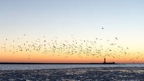 Birds flying in sunset over frozen sea Royalty Free Stock Image