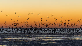 Birds flying in sunset over frozen sea Stock Images