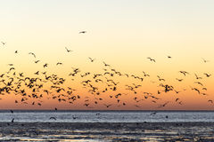 Birds flying in sunset over frozen sea Stock Photo