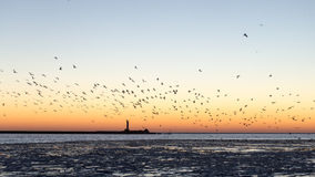 Birds flying in sunset over frozen sea Royalty Free Stock Photos