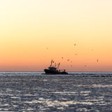 Birds flying in sunset over frozen sea and small ship Stock Photography