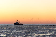Birds flying in sunset over frozen sea and small ship Royalty Free Stock Photos