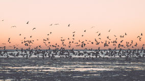 Birds flying in sunset over frozen sea - vintage retro effect Stock Photography
