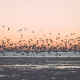 Birds flying in sunset over frozen sea - vintage retro effect Royalty Free Stock Photos