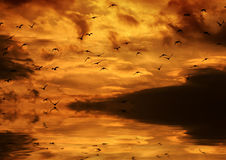Birds flying in the sunset and reflector in the wa Stock Photos