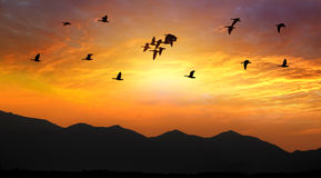 Birds Flying at Sunset Stock Photo