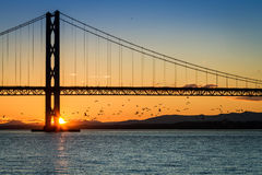 Birds flying at sunset under the bridge Stock Photography