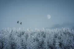 Birds flying to the moon. On a winter day Royalty Free Stock Image