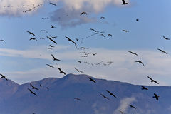 Birds flying to warmer areas Stock Photography