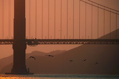 Birds Flying Under Golden Gate Bridge Stock Images