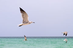 The birds. Flying birds under the ocean, Miami Beach Florida Stock Images